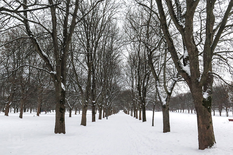 Winter im Frognerparken